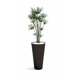 OBRUS Végétaux décoratifs